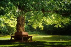 tree-3204332_1920